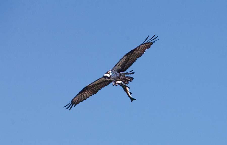 oiseau-A