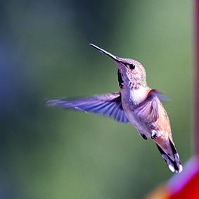 1205 colibri olivier Corrigé de philo :